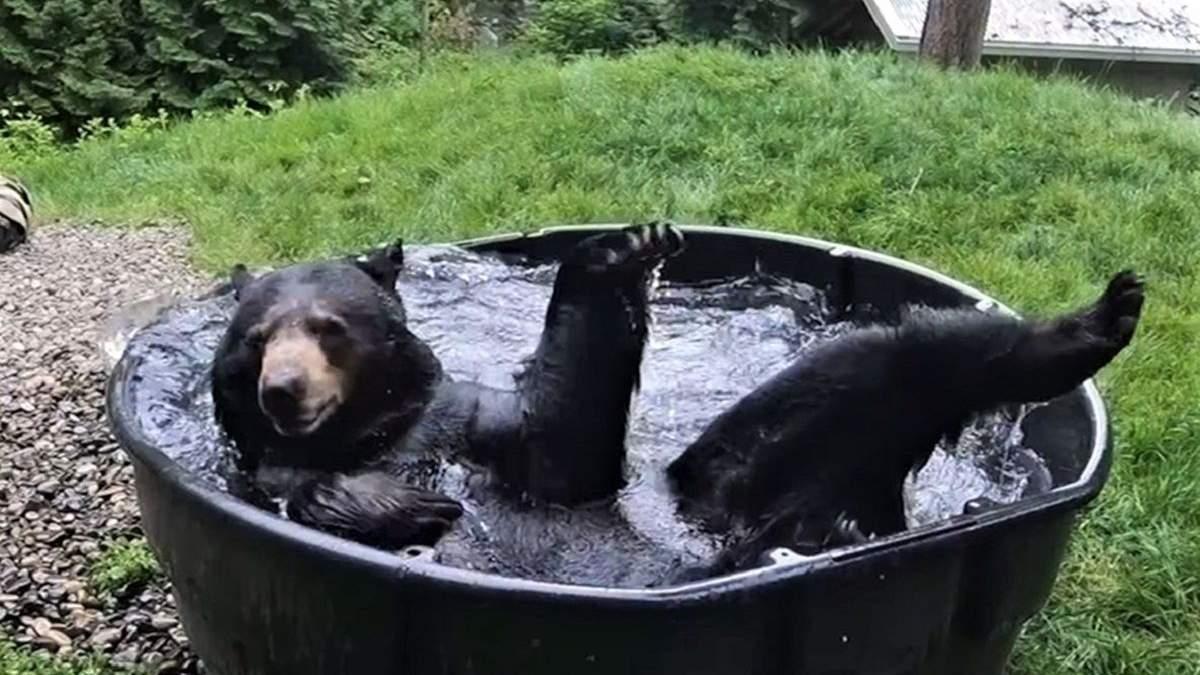 Медведь принимает ванну