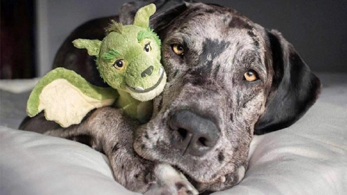 Любимые игрушки домашних питомцев: милая подборка фото из сети