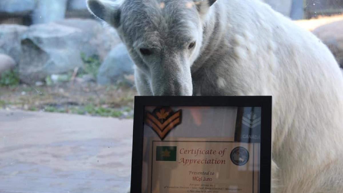 Белой медведице сделали сюрприз на день рождения и присвоили звание капрала армии Канады