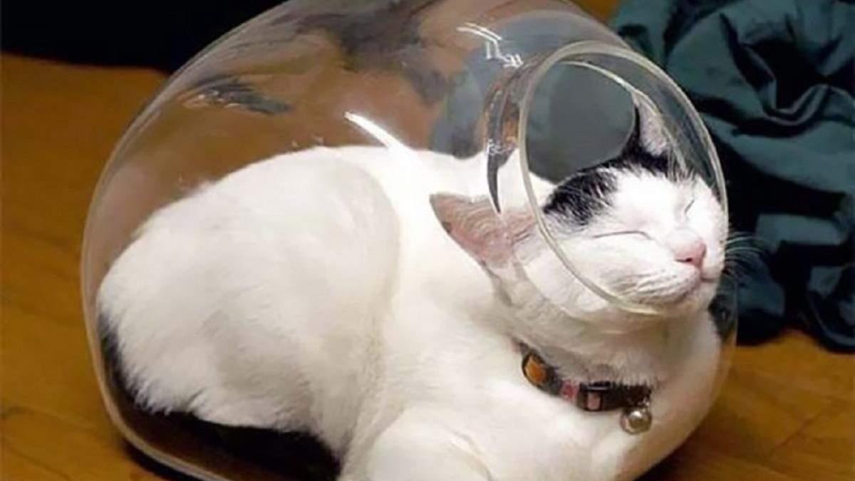 Де логіка: добірка фото котів, які сплять всюди, лише не на своєму місці