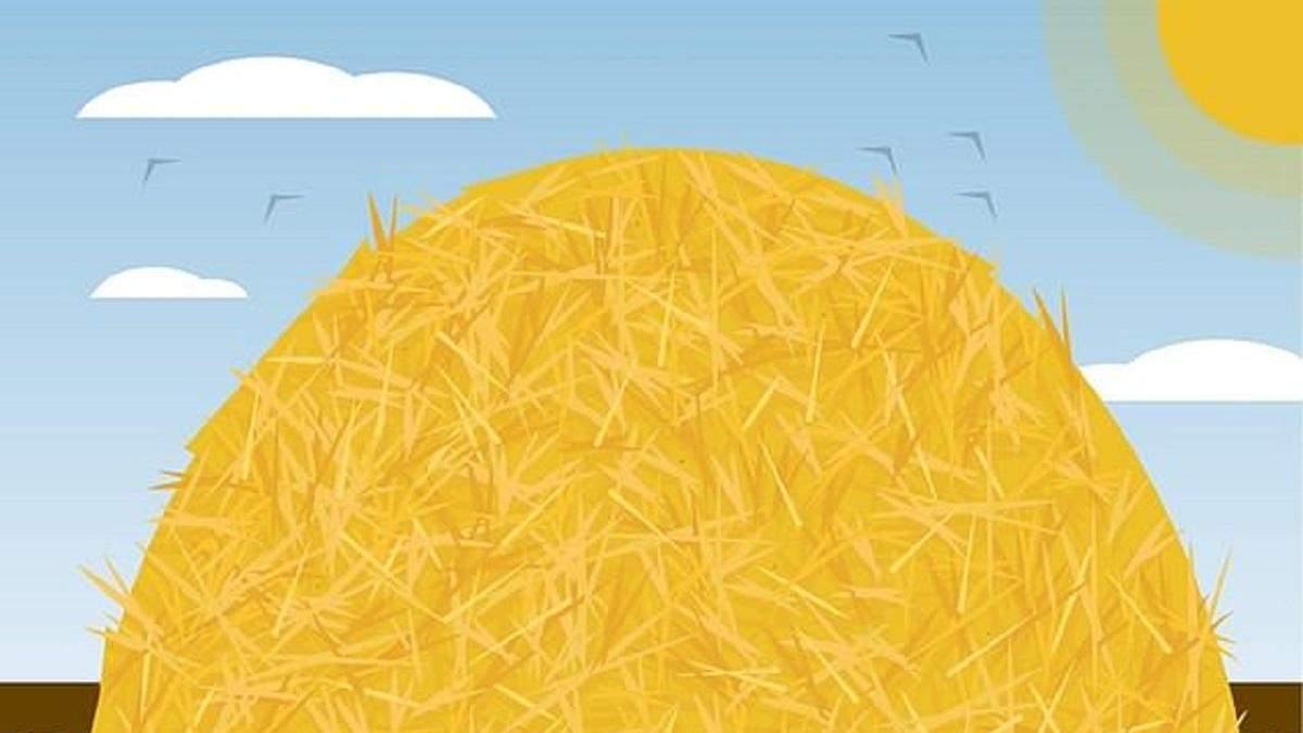 Искать иголку в стоге сена – новая головоломка: сможете ли вы побить рекорд 30 секунд