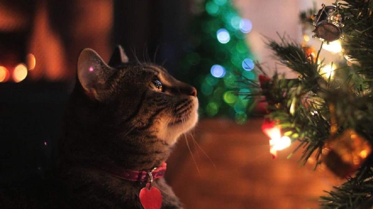 Як захистити новорічну ялинку від кота
