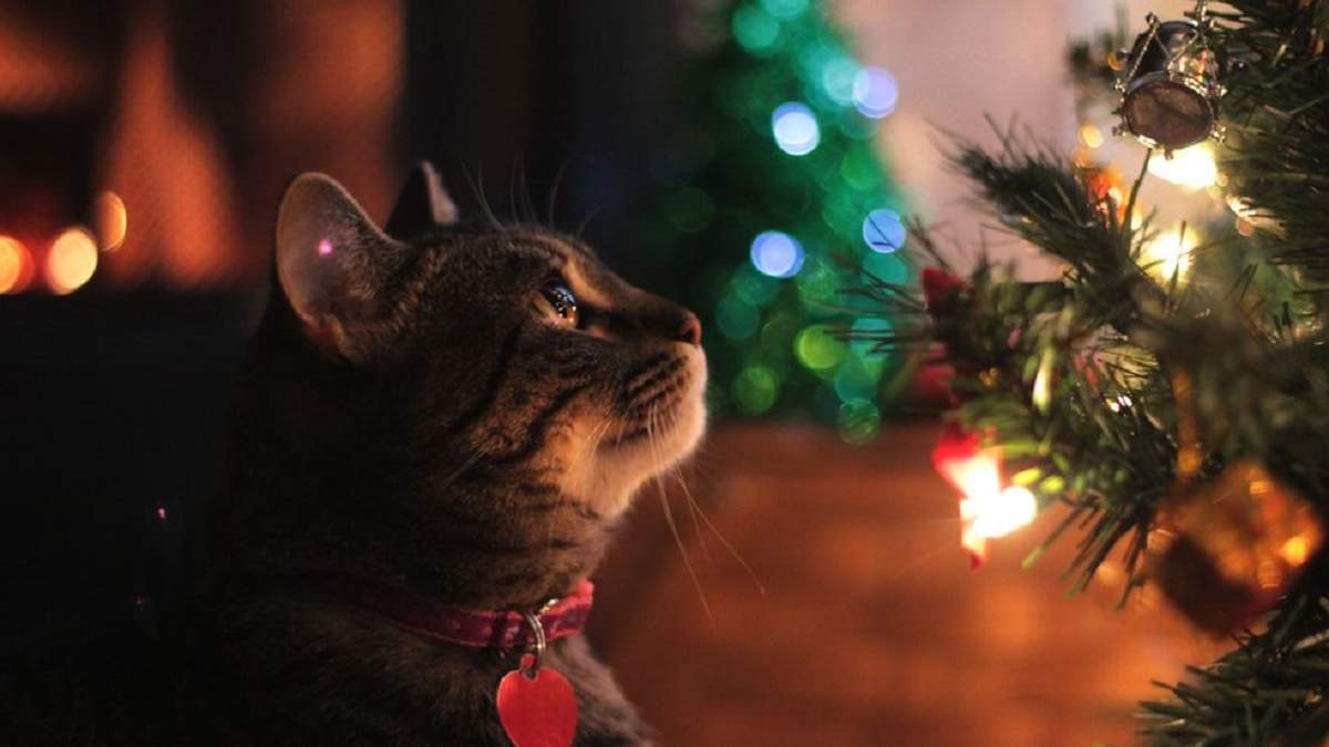 Напередодні нового року: як захистити новорічну ялинку від кота – фотоінструкції