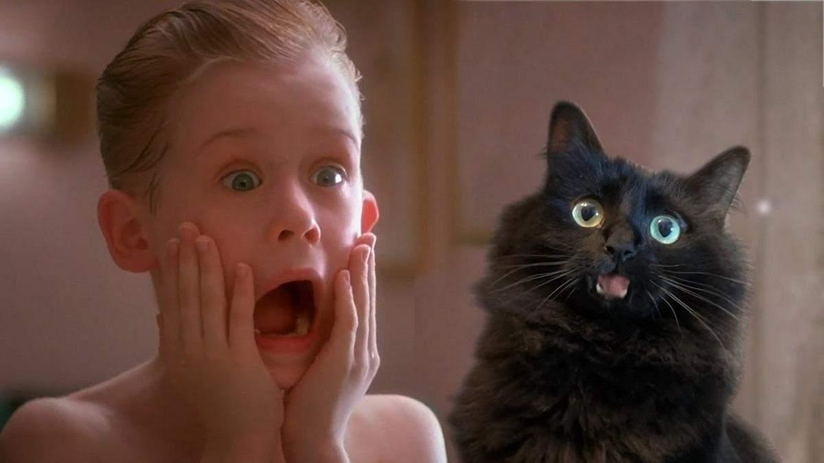 """""""Сам удома"""": якби Кевін Маккаллістер залишився удвох з котом – кумедна пародія"""
