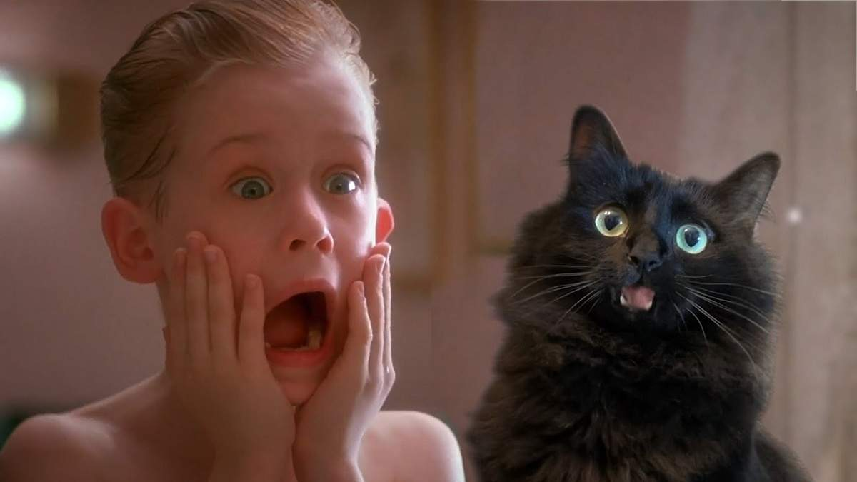 """""""Один дома"""": если бы Кевин Маккаллистер остался вдвоем с котом – забавная пародия"""