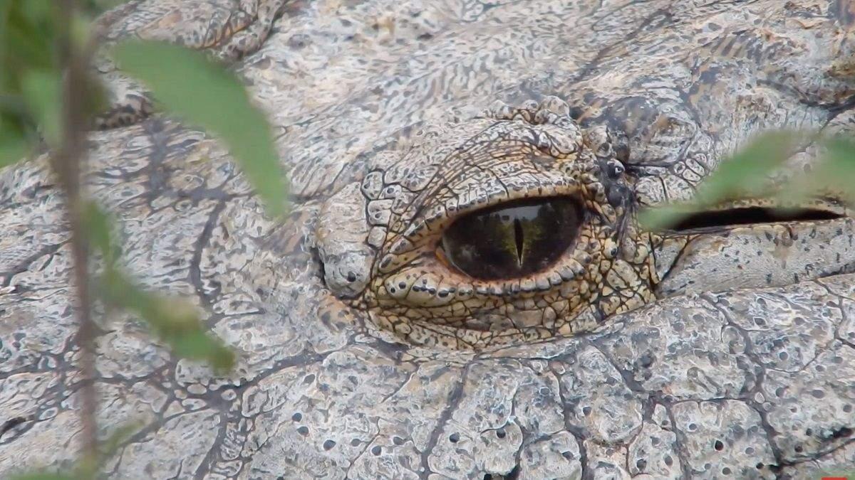 Старейший крокодил Генри, живущий в неволе, празднует 120-летие