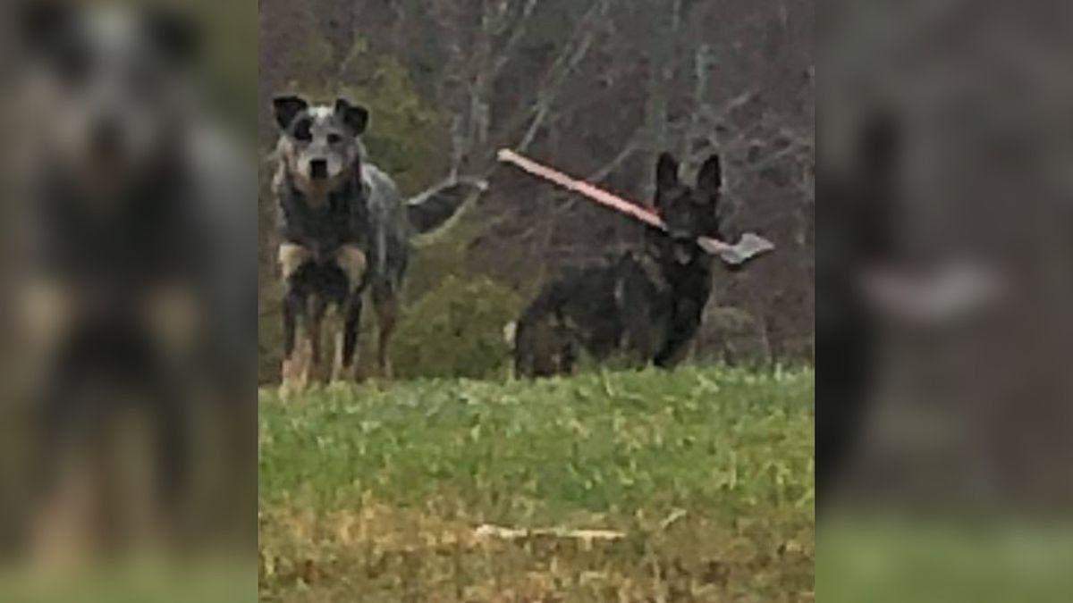 Листоноша не зміг доставити пошту – на заваді став пес із сокирою