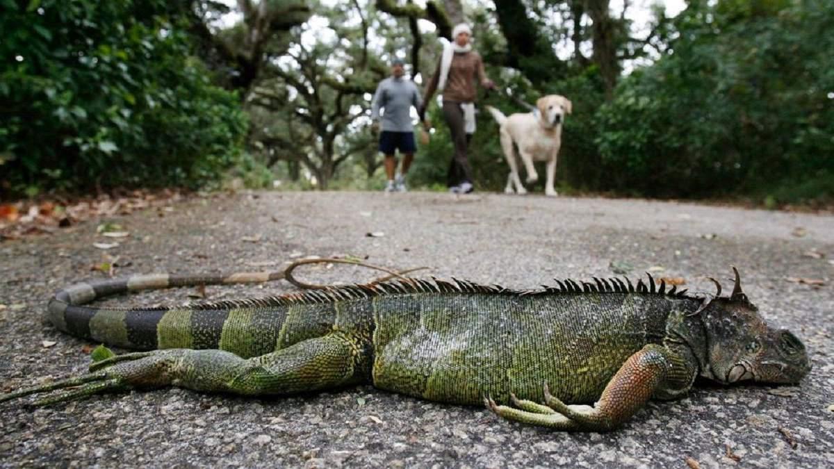Холодно, часом пролітають ігуани: синоптики зробили дивний прогноз для Маямі