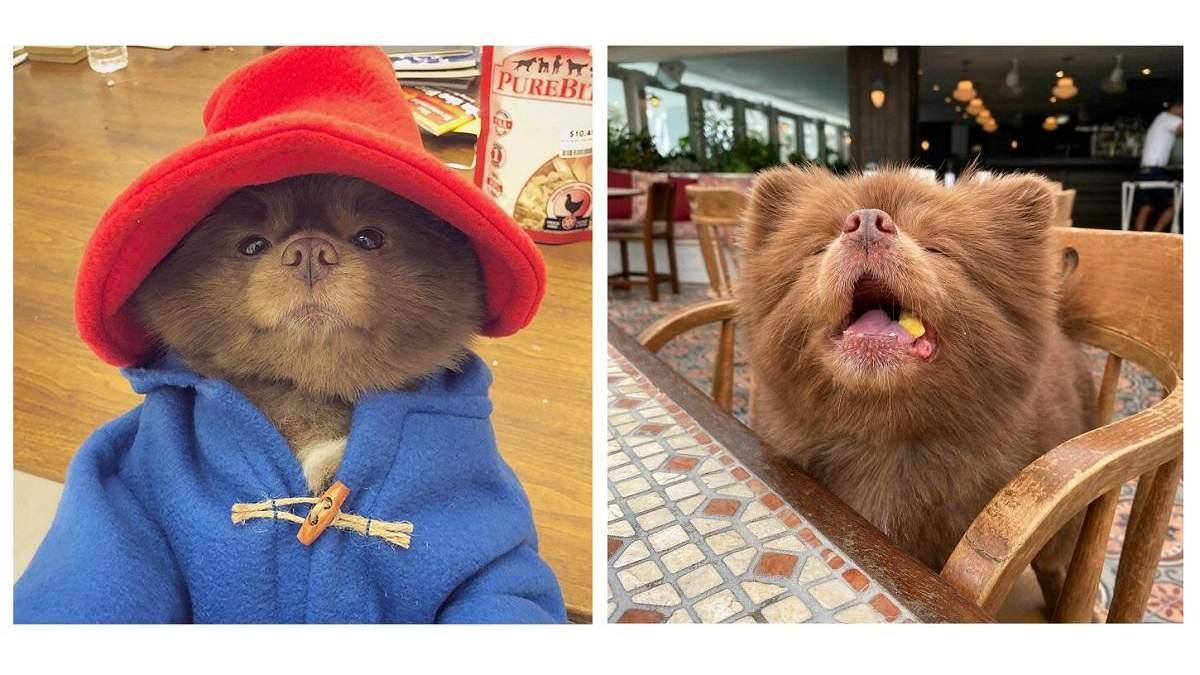Щенок, похожий на медвежонка, которого бросили в приюте, стал звездой Instagram: милые фото