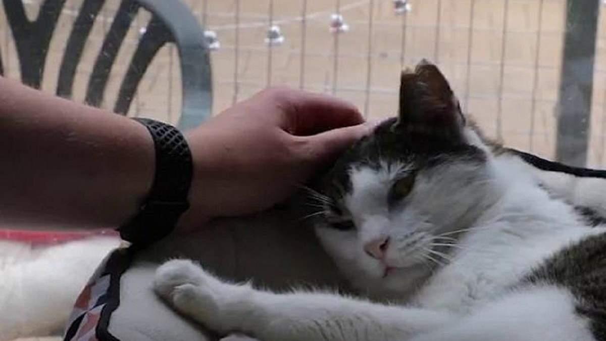 Самый сварливый кот Австралии наконец нашел дом после сюжета в местных СМИ: видео
