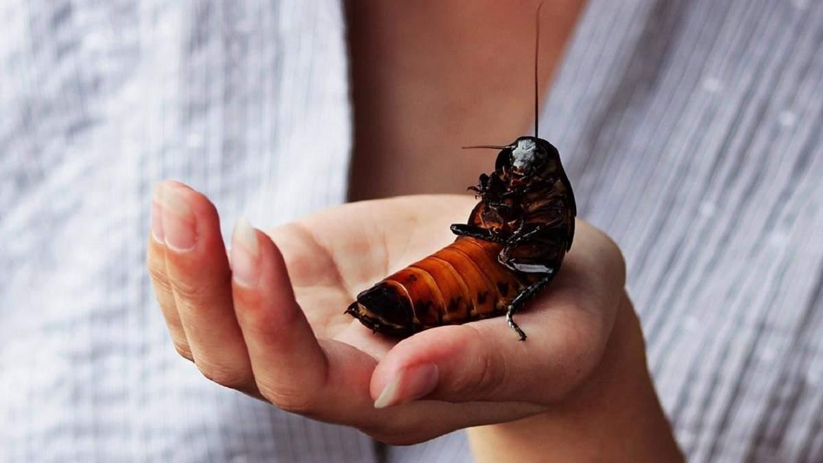 Вы видели Колина: объявление о пропавшем таракане, которое стало вирусным – фото