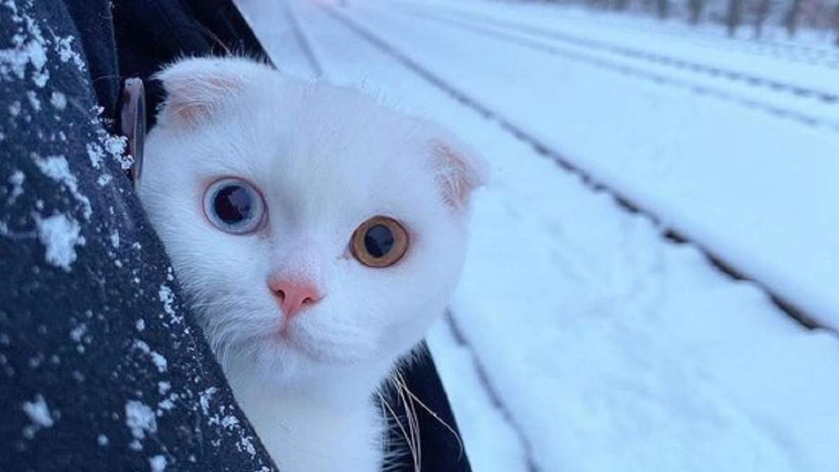 Чому вам потрібен кіт: ідеальний твіттер-аккаунт, що переконає близьких завести милу тваринку