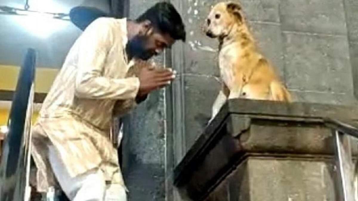 В Индии пес сидит у дверей храма и отпускает грехи посетителям: забавное видео