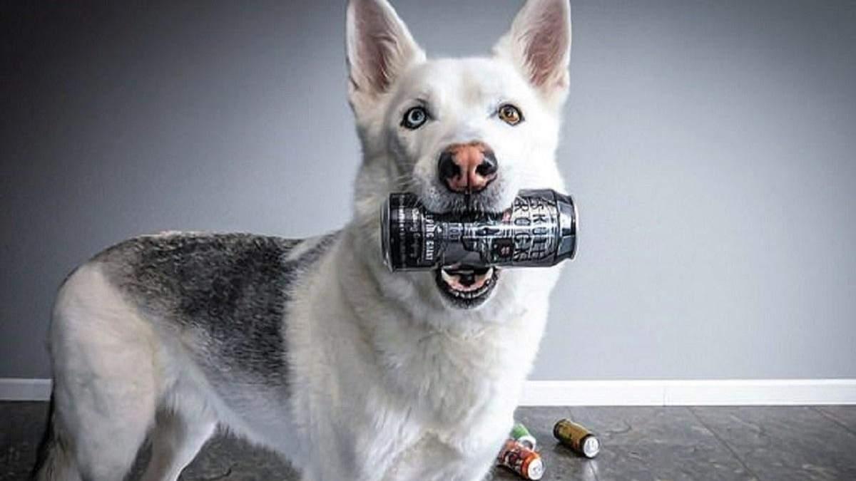 Обязанности домашних любимцев: мужчина научил свою собаку приносить ему пиво – видео