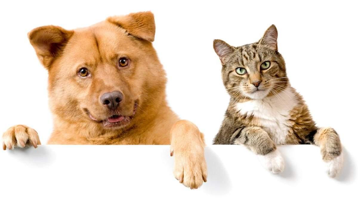 Як бачать світ домашні тварини