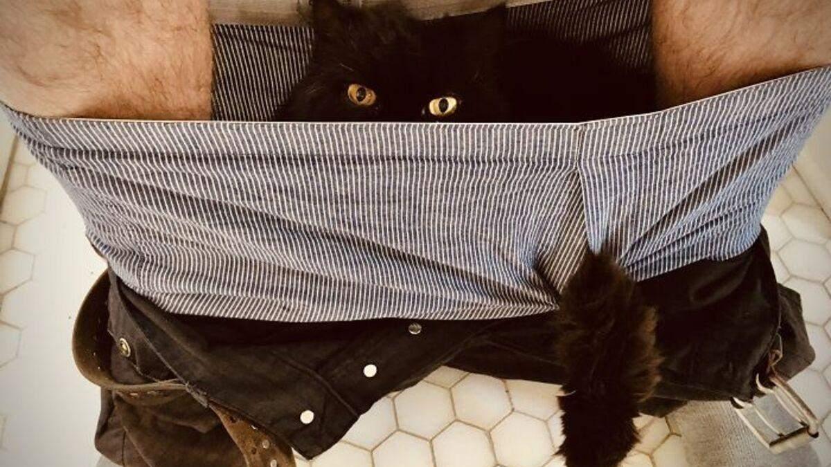 Що не так з цим котом: кумедні фотографії, на яких домашні улюбленці поводяться дуже дивно