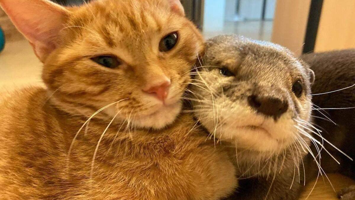 Забавная дружба кота и выдры: они живут вместе и спят в обьятиях – милые фото и видео