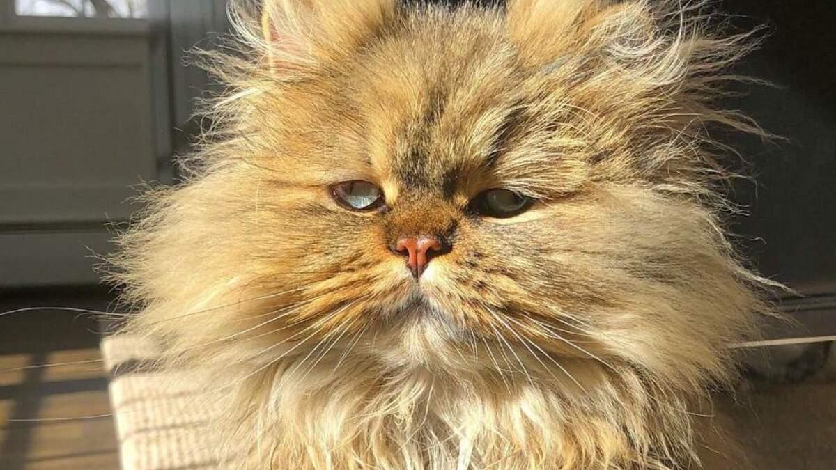 Утро понедельника: кот всегда выглядит так, будто только что проснулся после веселых выходных