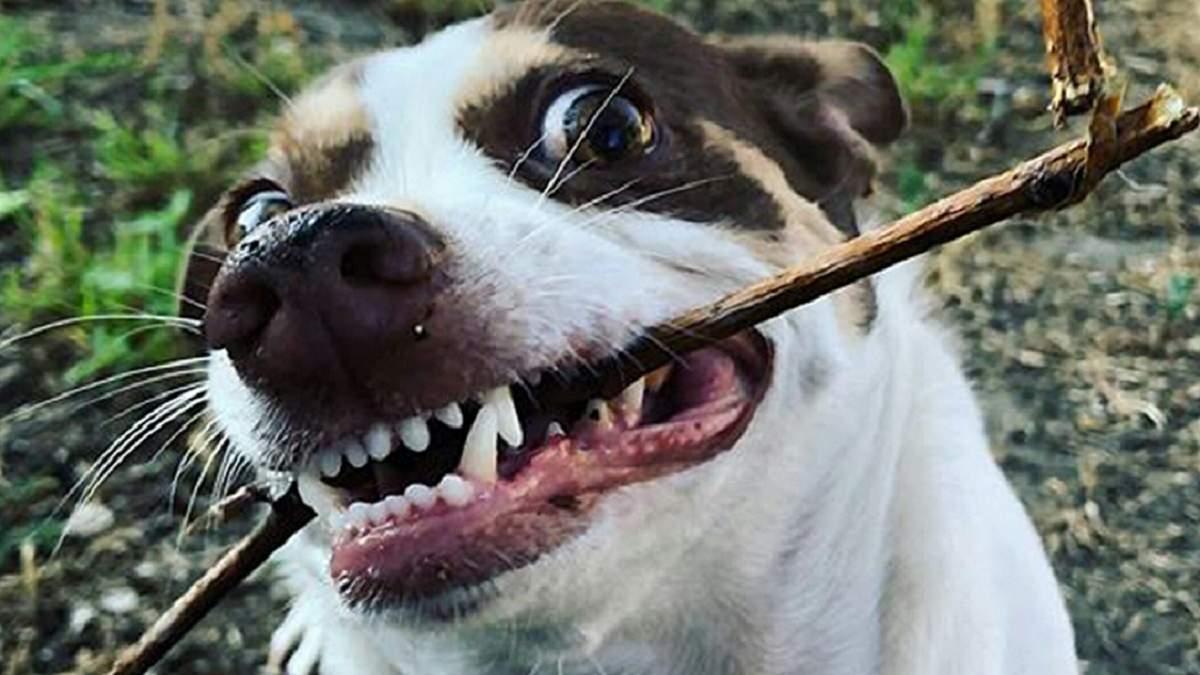 Містер Бабз – злісний, але водночас наймиліший пес в мережі