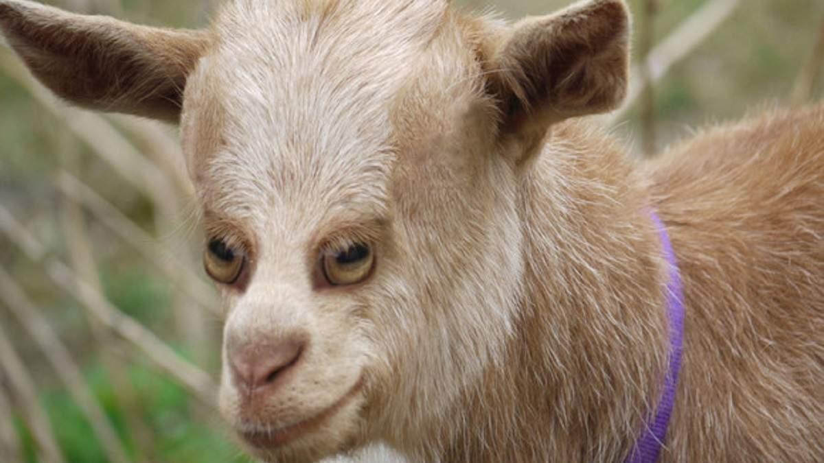 Как выглядели бы животные, если бы глаза у них были спереди: забавные фото