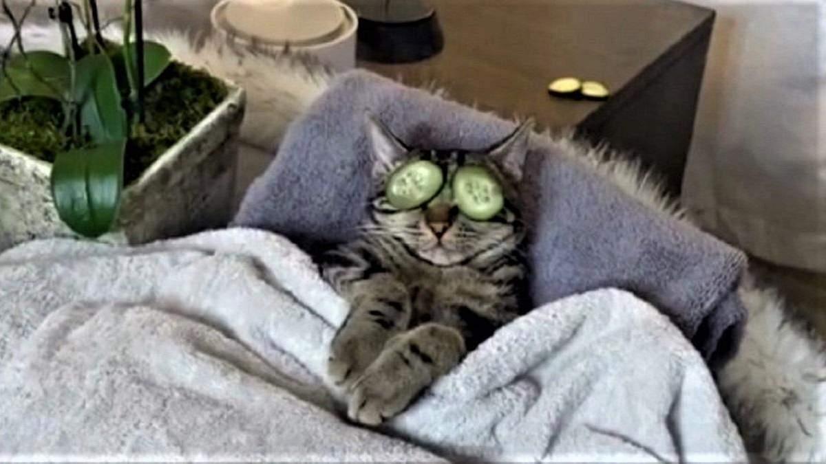 Спа-процедуры для кота