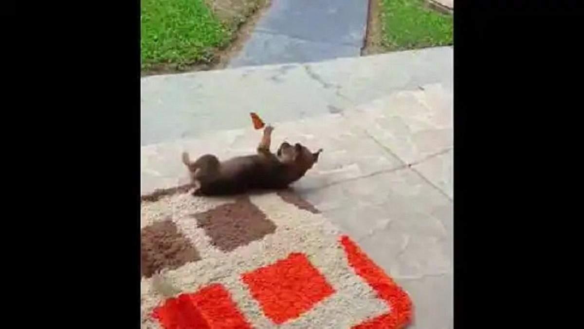 День цуценят: песик, який грається з метеликом