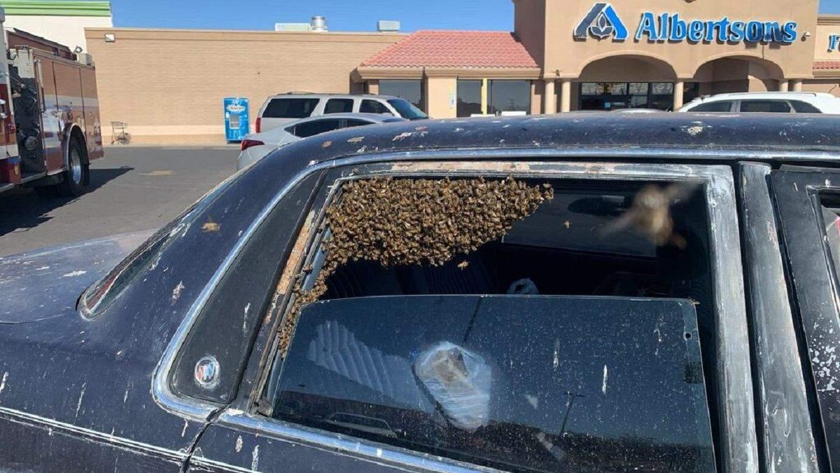 15 тисяч бджіл залетіли до автомобіля