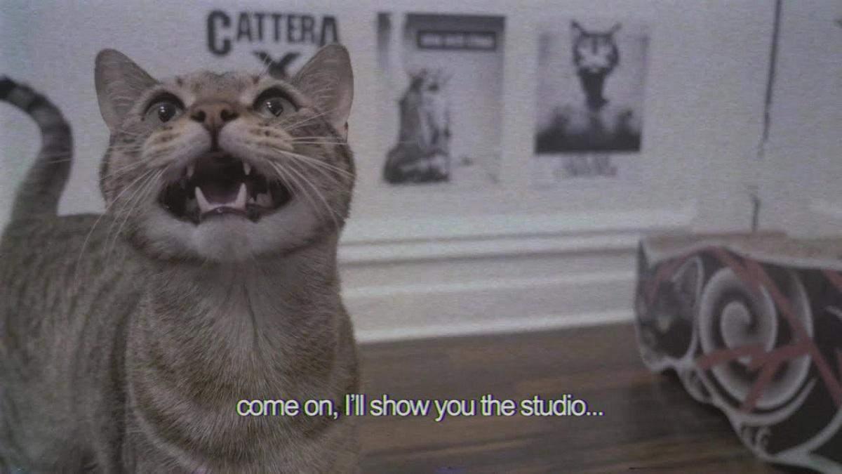Музыкальная группа, состоящая из кошек, записала свой первый сингл на благотворительность