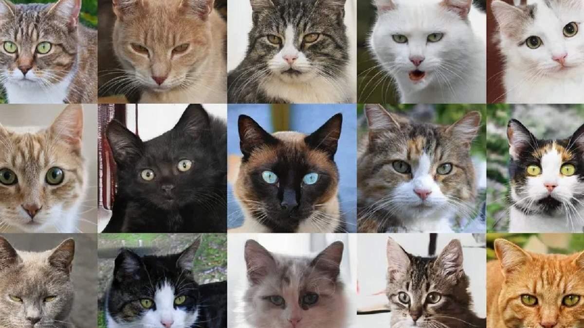 Человечество в опасности: искусственный интеллект научился генерировать реалистичные фото котов