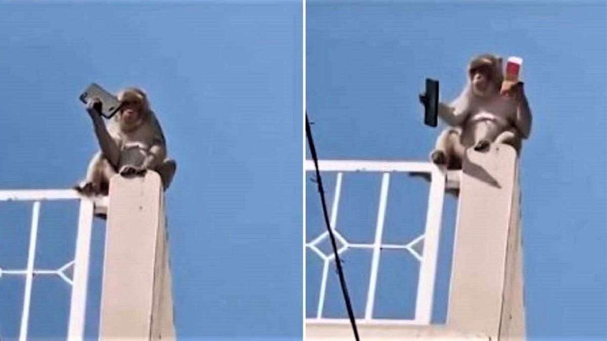 Мавпа вкрала у чоловіка телефон і вимагала за нього викуп: смішне відео