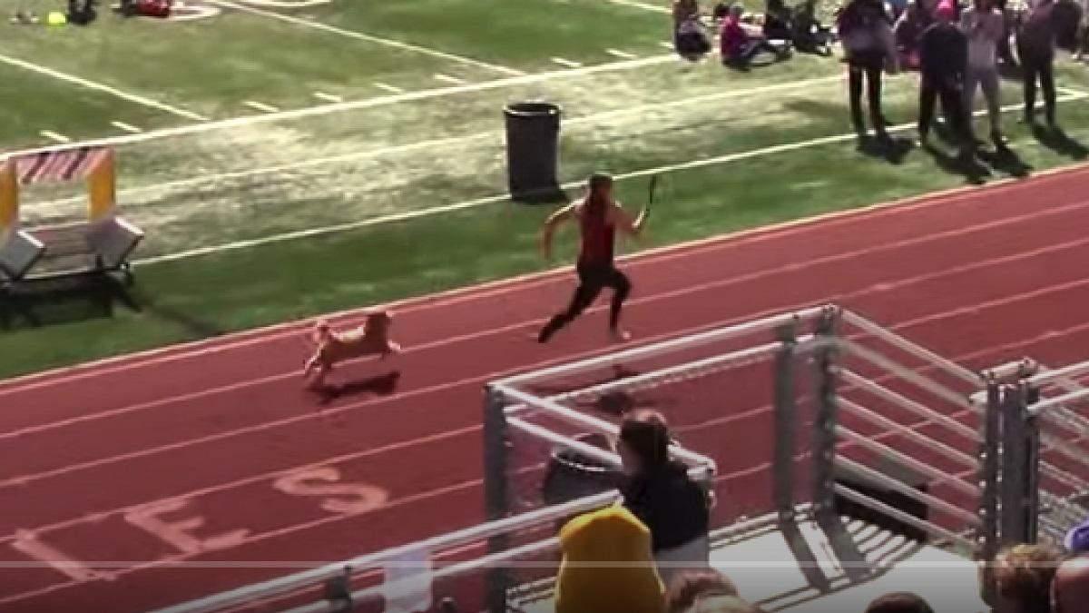 Веселый финиш: пес выбежал на беговую дорожку на соревнованиях по эстафетному бегу и победил