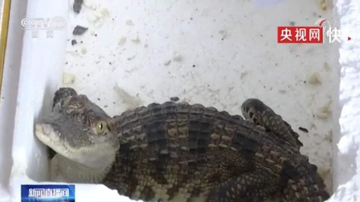 Дитина замовила в інтернет-магазині рибку, а отримала живого крокодила