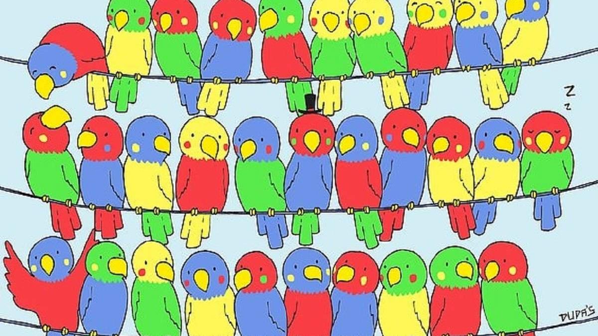 Головоломка недели: найдите одинокую птичку