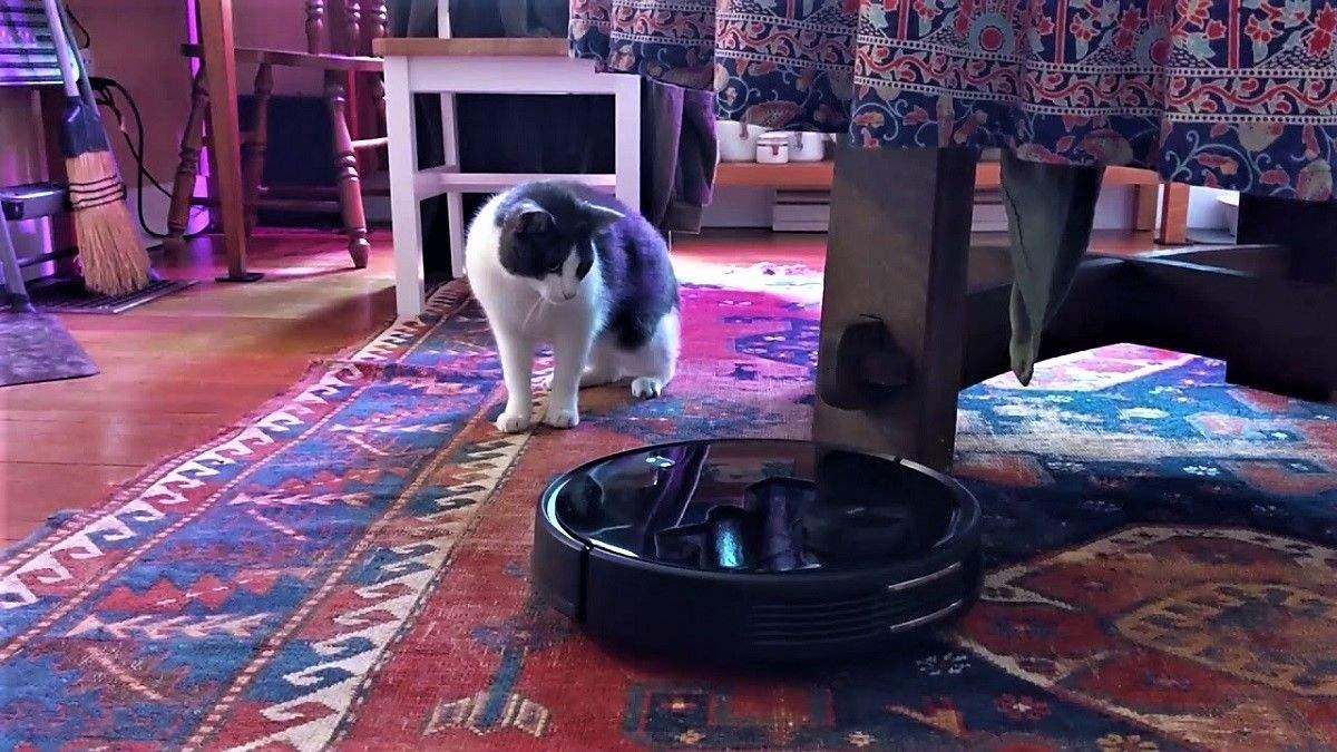 Как котик с роботом-пылесосом сражался: смешное видео