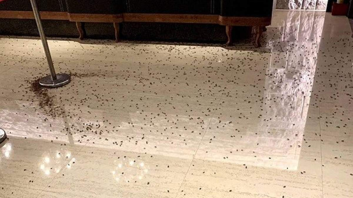 В ресторан подбросили 1000 тараканов