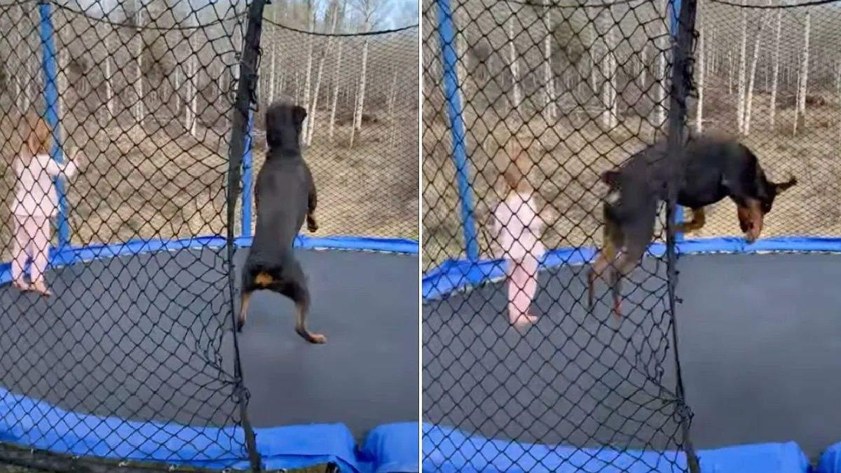 Девочка и ротвейлер наслаждаются совместными веселыми прыжками на батуте: увлекательное видео