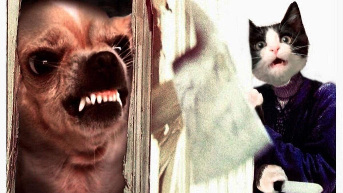 Киноафиши с котами и собаками