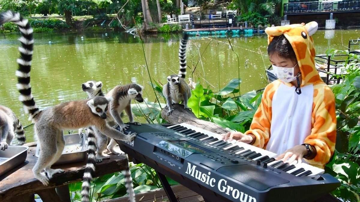 Девочка играет музыку для животных в тайском зоопарке: увлекательное видео