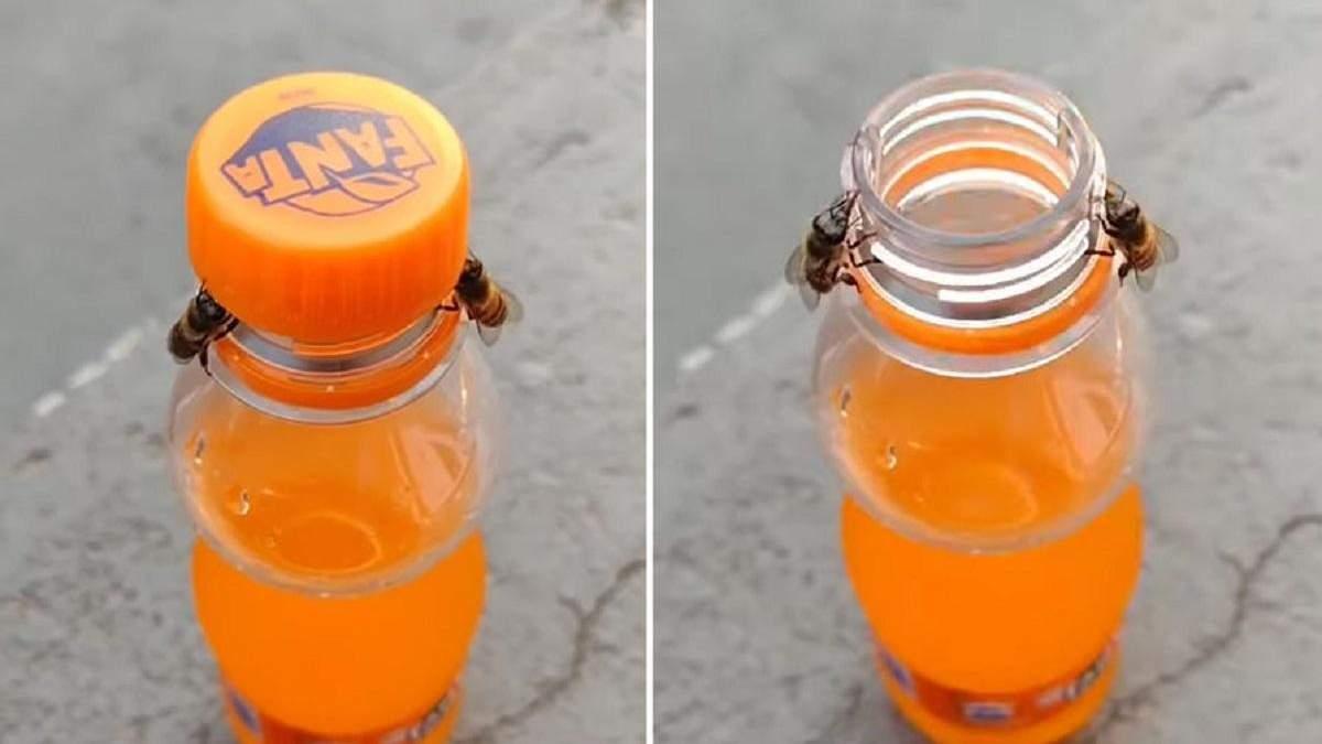 Пчелы открыли бутылку с водой