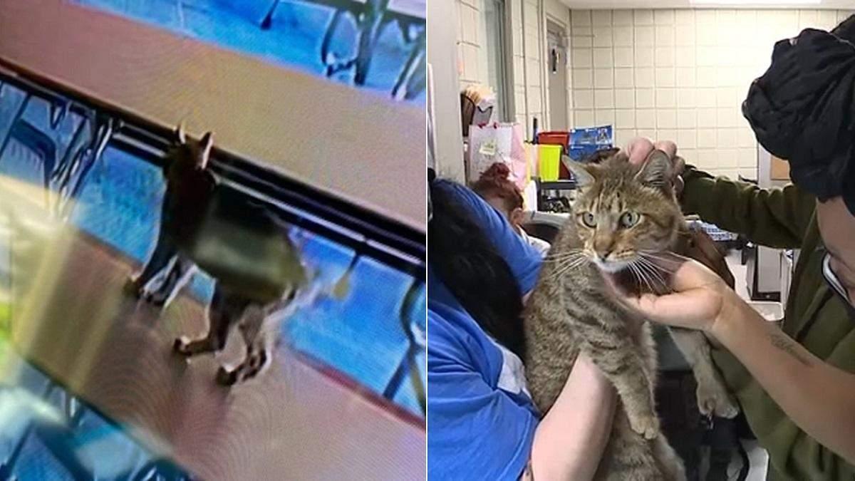 Небольшая путаница: в США эвакуировали школу из-за рыси, которая оказалась домашним котом