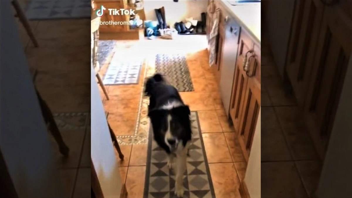Собака перепутала дома