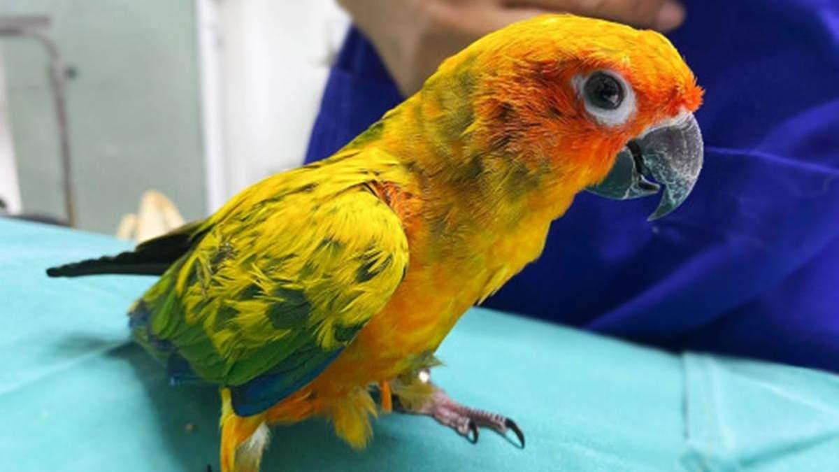 Папуга наївся діамантів