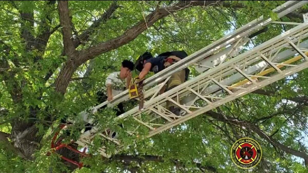 Спасали обоих: пожарные сняли с дерева парня, который полез туда за своим котом