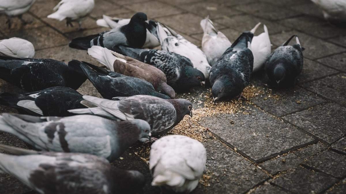 В Великобритании штрафуют за кормление птиц на улице