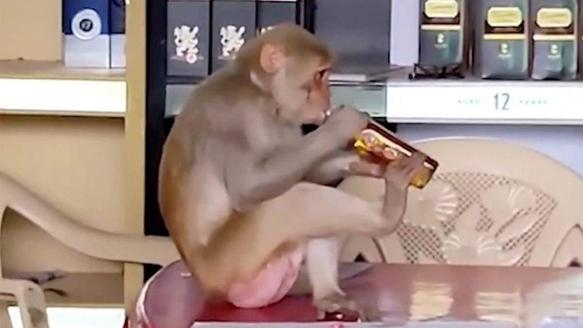 Мавпа п'є алкоголь в індійському магазині