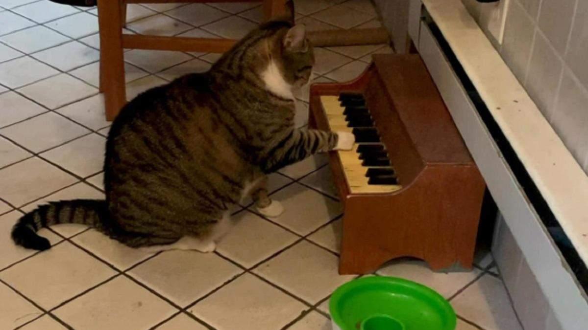 Играет на пианино, когда хочет есть: котик, который необычным способом просит еду, покорил сеть