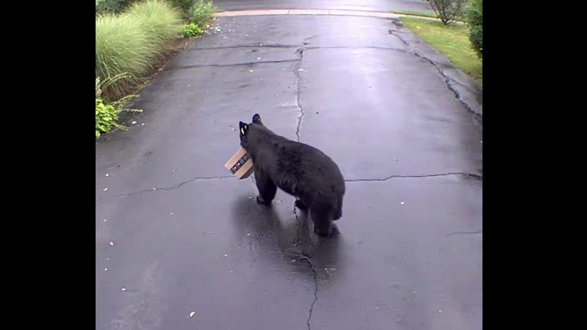 У США ведмідь поцупив коробку Amazon з подвір'я будинку: відео, яке підірвало мережу - Розваги