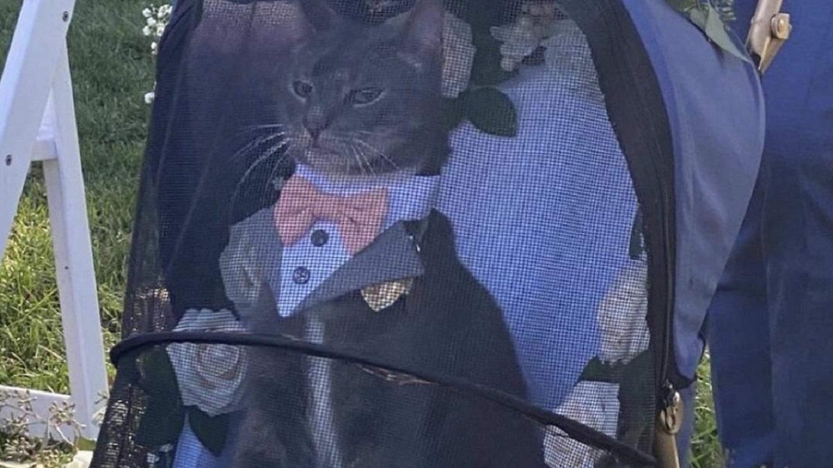 Пухнастий дон Корлеоне: представницький весільний кіт став зіркою мережі – кумедні фото