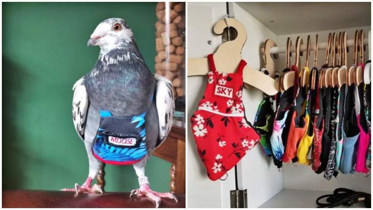Роскошь для птиц: женщина тратит более 5000 долларов в год на костюмы для голубей - Развлечения