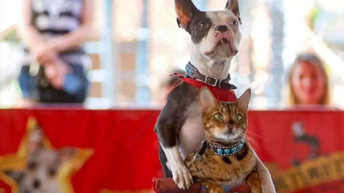 Самі придумали трюк: кіт з собакою проїхалися на самокаті й потрапили до книги рекордів Гіннеса - 16 сентября 2021 - Развлечения